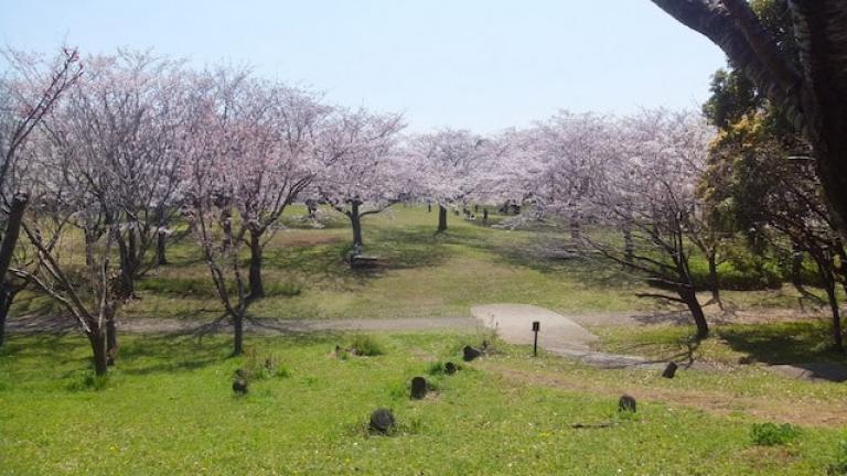 綺麗な桜を満喫できる青葉の森公園