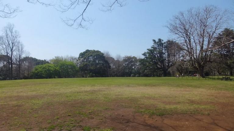 中央広場 - 青葉の森公園