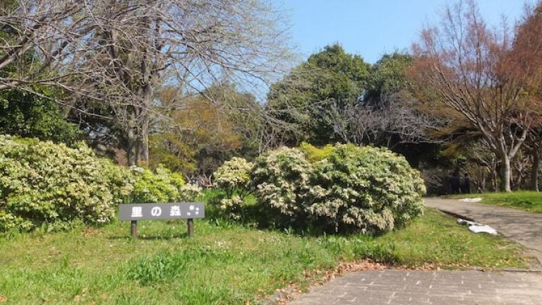 里の森 - 青葉の森公園