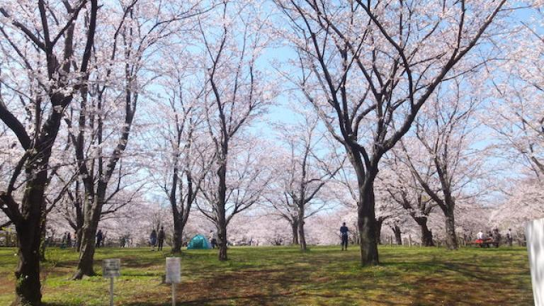 おはなみ広場 - 青葉の森公園