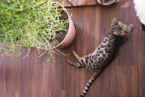 image 猫との暮らしを楽しむ家づくり
